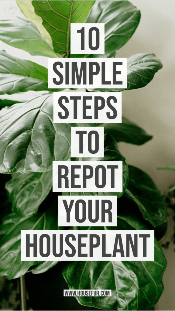 10 Simple Steps to Repot Your Houseplant