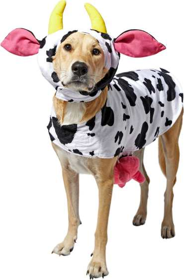 cow dog halloween costume