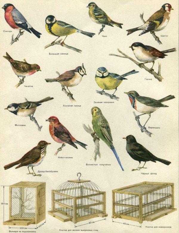 Птицы Юга России Фото С Названиями