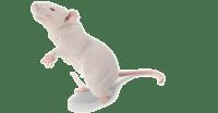 100% LTV loans japan real estate mouse