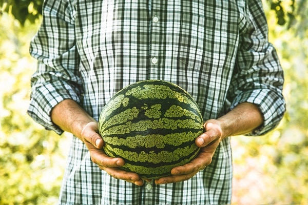 How To Know Which Watermelon To Choose