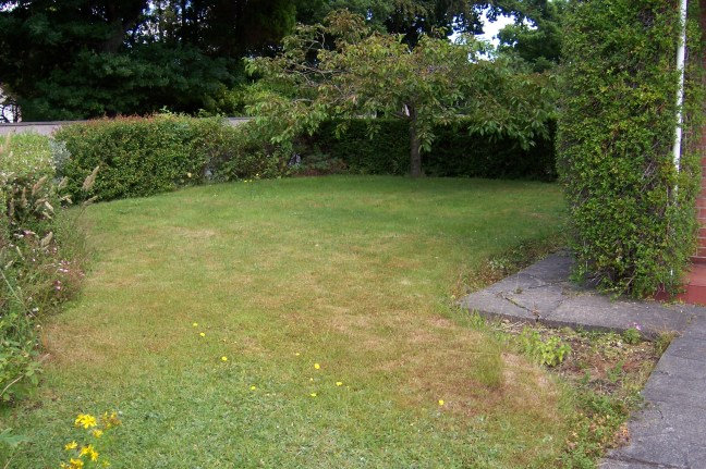 Front garden - we'd like to make a wildlife area under the tree.