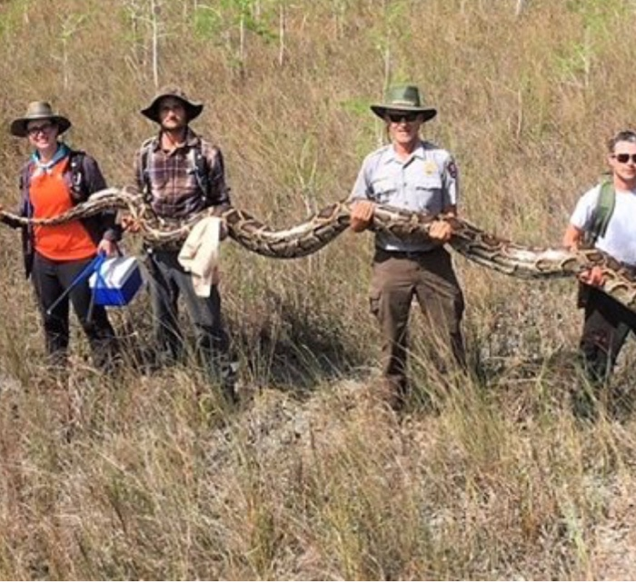 World's Longest Python, 17-Foot Found In Florida