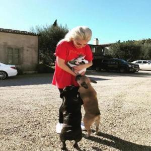 Lady Gaga's dogs stolen