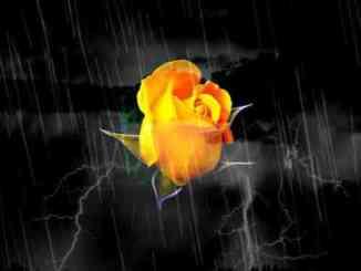 T.O.N.E-z – Follow The Yellow Rose Album (download)