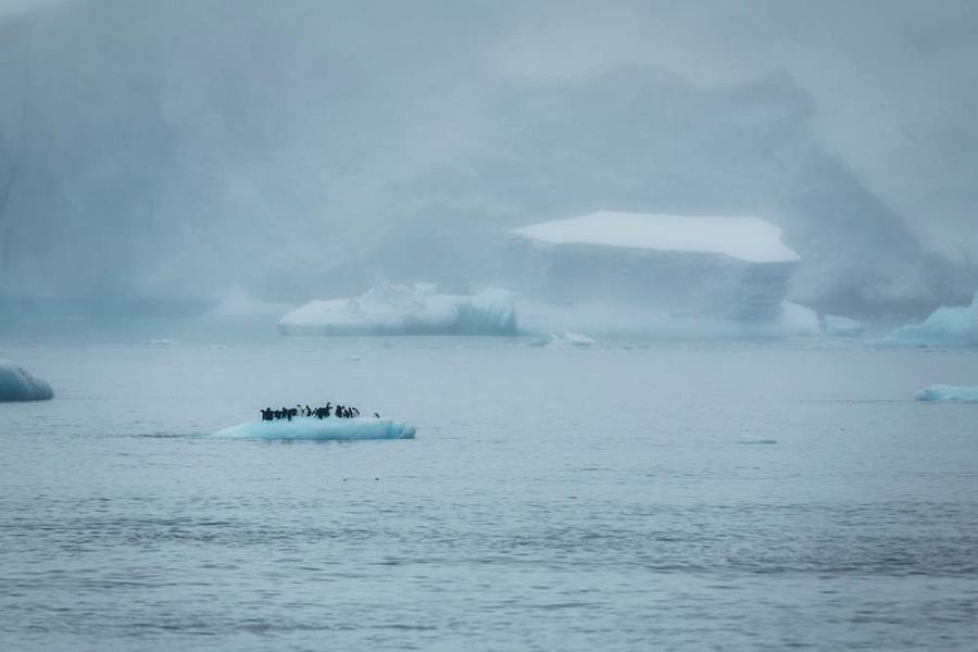Christian Aslund, Frozen Landscape – Hope Bay, Trinity Peninsula, Antarctica