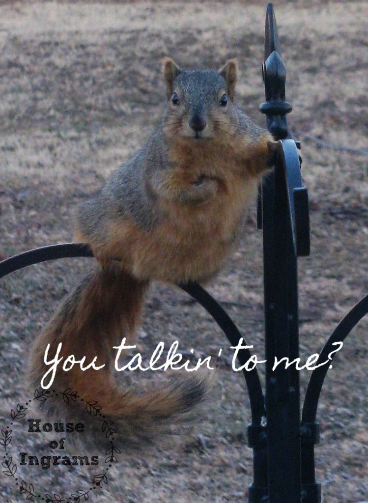 Squirrel Talk
