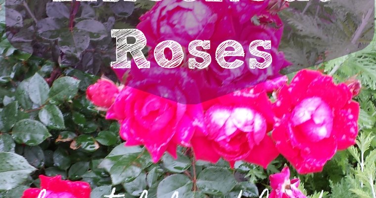The Easiest Roses