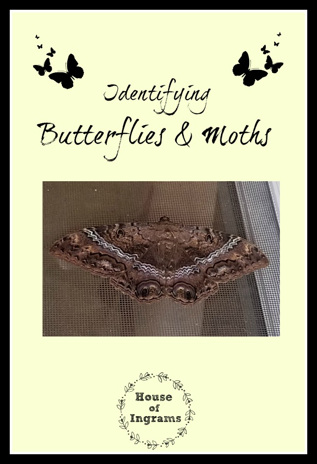 Identifying Butterflies and Moths using BAMONA website from HouseofIngrams.com
