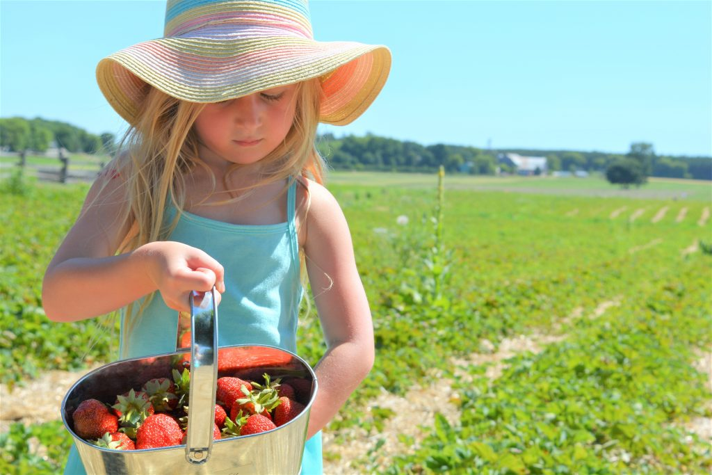 Summer Festival | Brooks Farms | Strawberry Picking