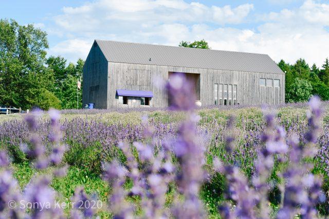 Terre Bleu Barn Photo Local Love Ontario