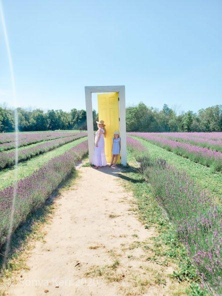 yellow door terre bleu