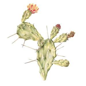 Opuntia monocantha