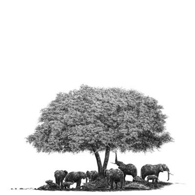 Elephant's Haven drawing by Pencil Artist | Bowen Boshier