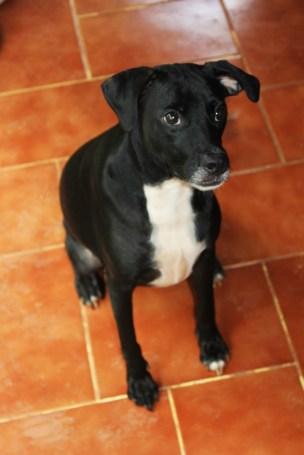 Bijou, sweet and intelligent