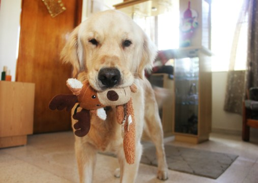 Casy with his Christmas toy