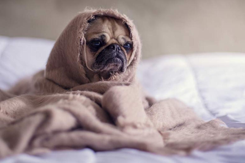 sick dog while house sitting