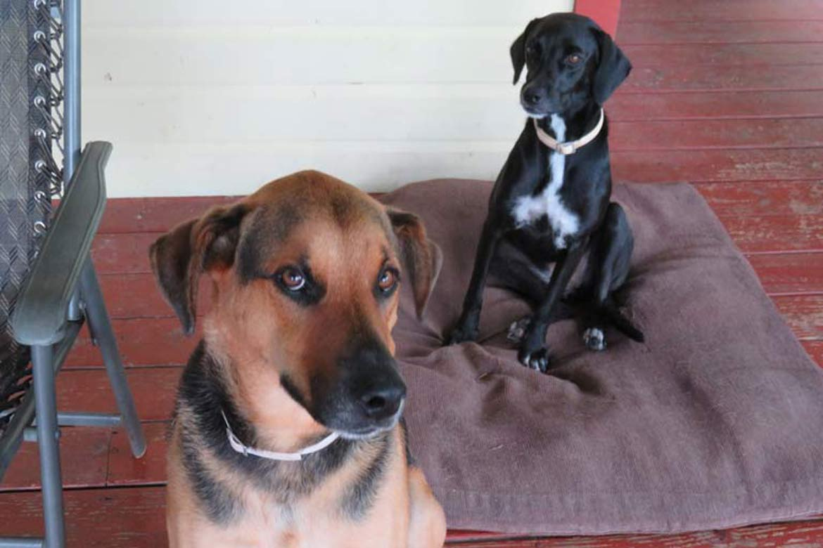Dog Sitting Rescue pets