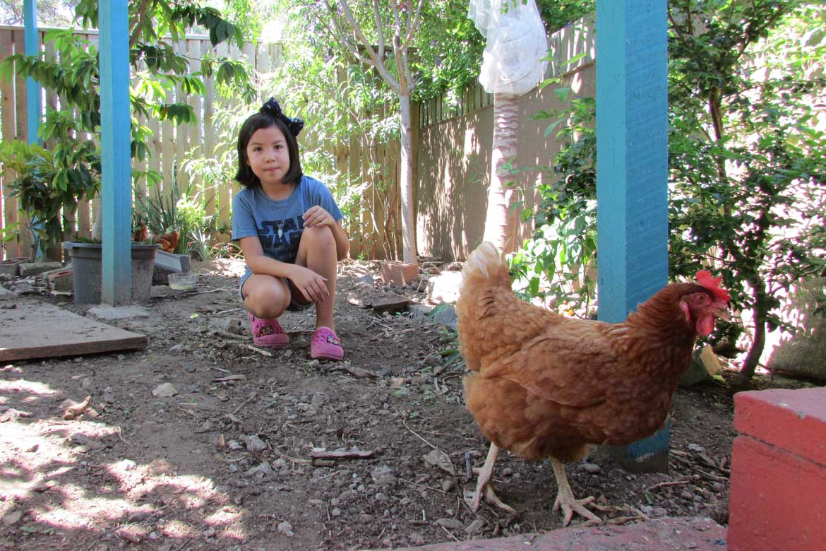 Looking after chickens on a family house sit