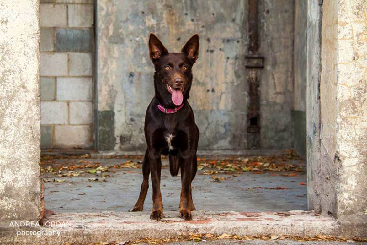 dog images for house sitter profiles