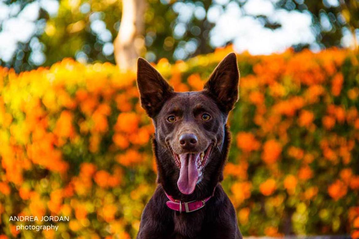 pet photography for house sitters