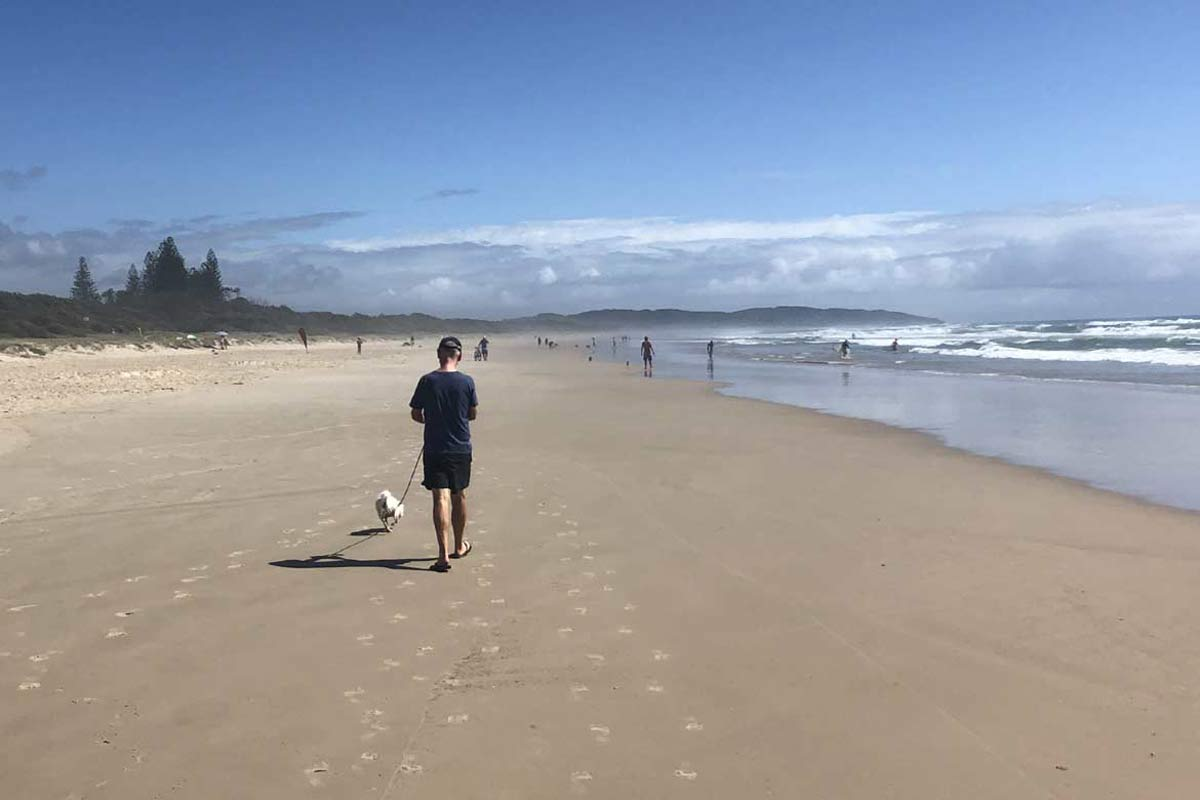 Dog walking on the beach in Australia