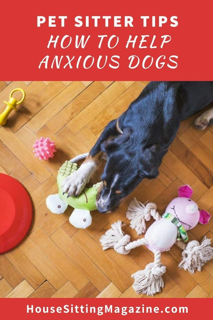 Are you house sitting with anxious dog? - 5 tips to help #petsitting #anxiousdogs #housesitsanxiousdogs