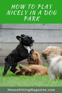 How to Play Nicely in Dog Parks #dogparks #dogparksafety #dogparkrules #housesitters #petsitters