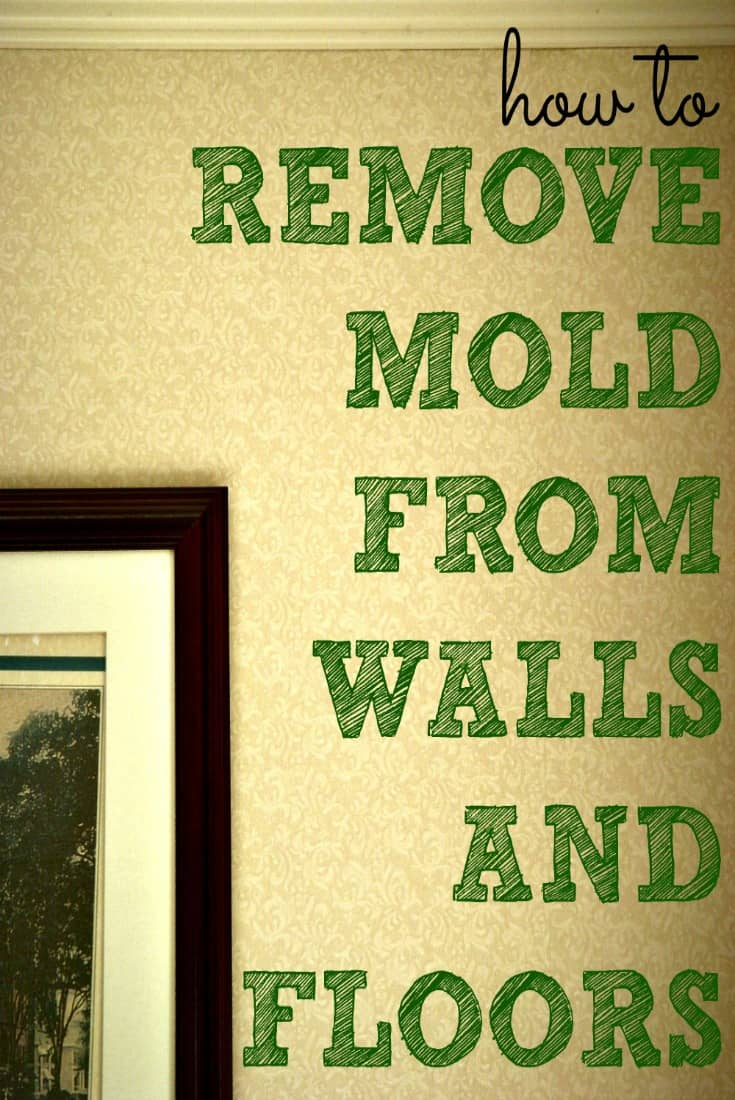 Captivating How To Remove Mold From Walls Housewife S