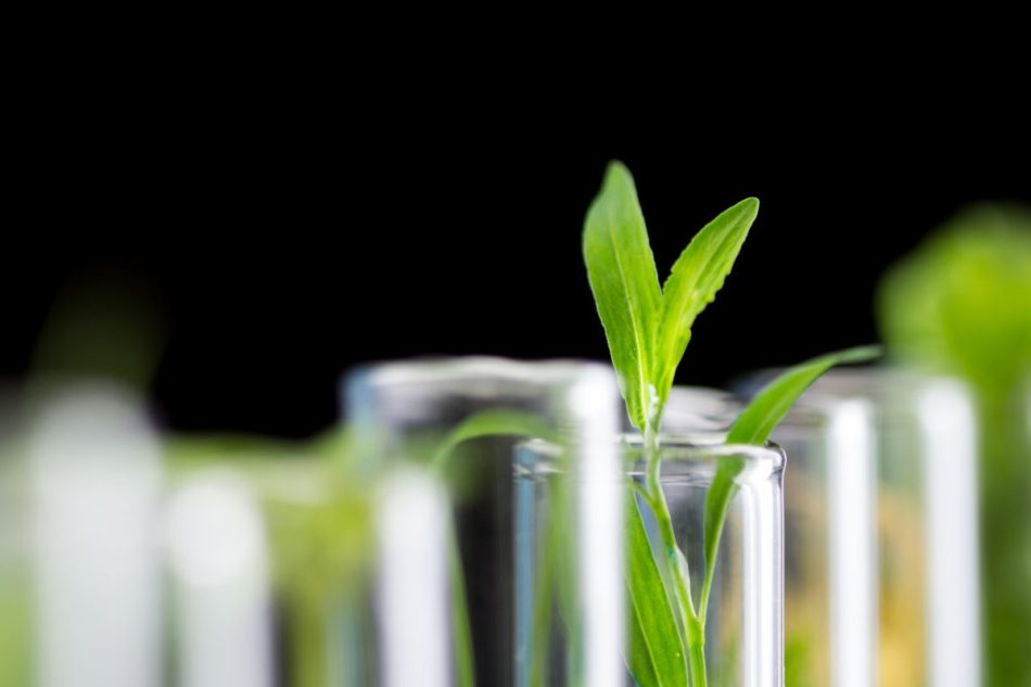 New plant-based COVID vaccine enters final stage of testing