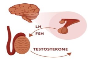 hCG and Testosterone