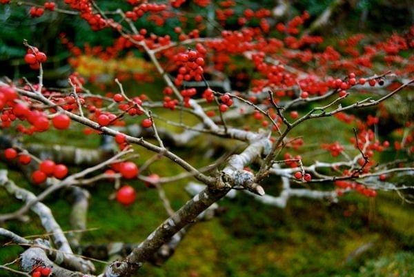 Viaje a Japon: Tokyo