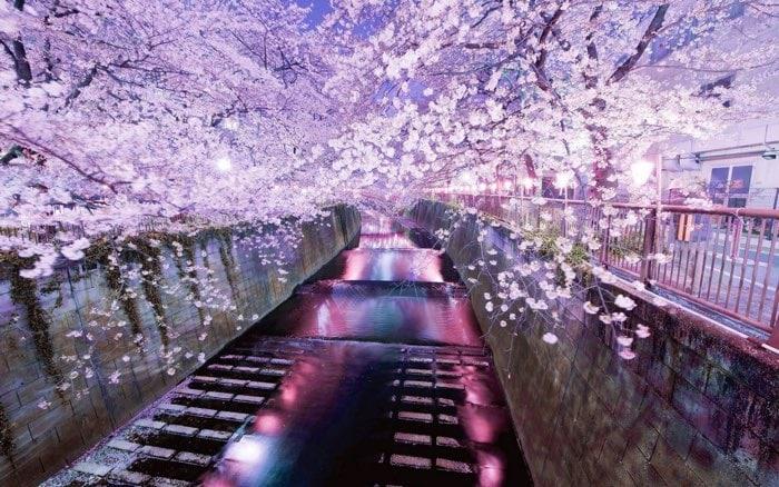Los 20 Mejores Lugares De Japon Para Ver Los Cerezos En Flor Fechas