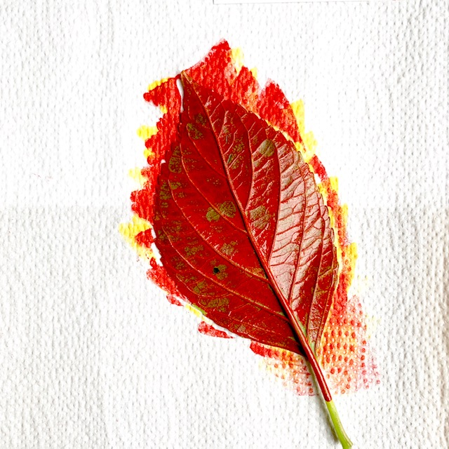 rode inkt typische herfstkleur