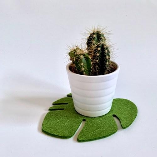 cactusplantje op vilten onderzetters plant - sfeer in huis