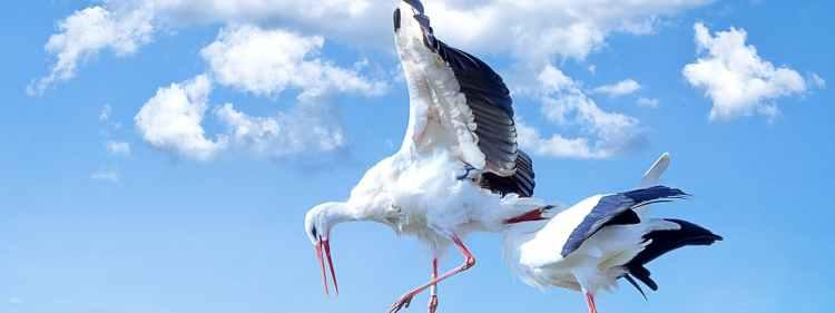 nature bird animal fly
