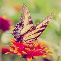 Butterfly,…
