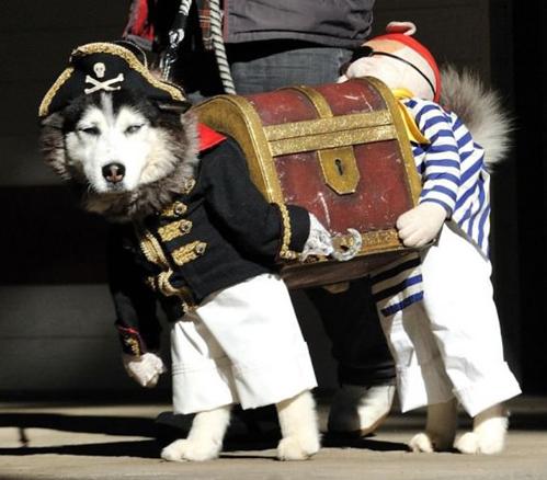 Dog Halloween costume.
