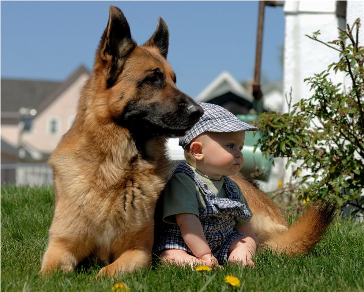 German sheperds are wonderful and loyal family dogs!