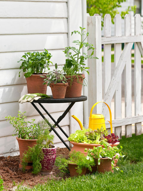 A Vegetable Garden in 4 easy steps