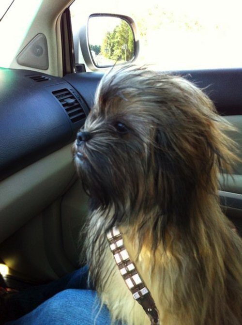 Haha – I feel like I could do this with my dog's hair, she looks similar