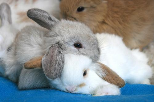 bunnies bunnies bunnies