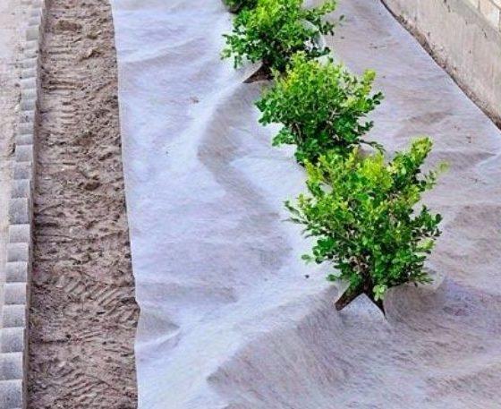 DIY Landscaping