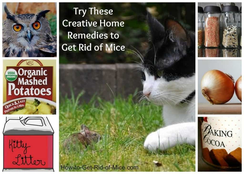 How To Get Rid Of Mice In House