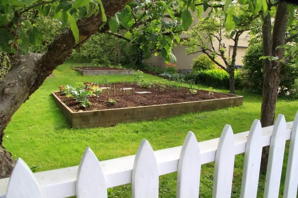 How Make Raised Vegetable Garden Your Backyard