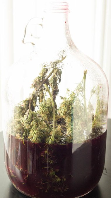 Recipe for How To Make Marijuana Wine