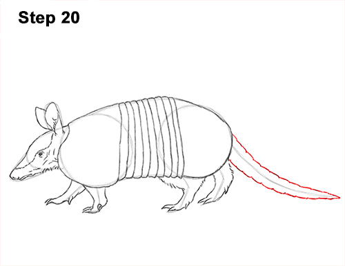 how to draw an armadillo # 6