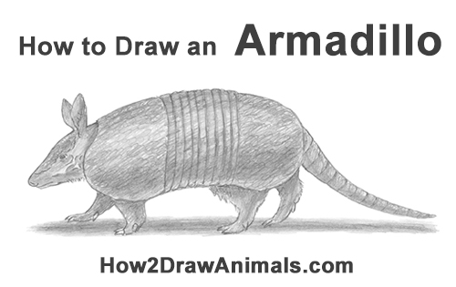 how to draw an armadillo # 0