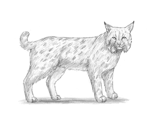 Easy Pencil Animals Drawings Shading
