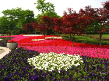 Hangzhou's spring brings a carpet of flowers into bloom.